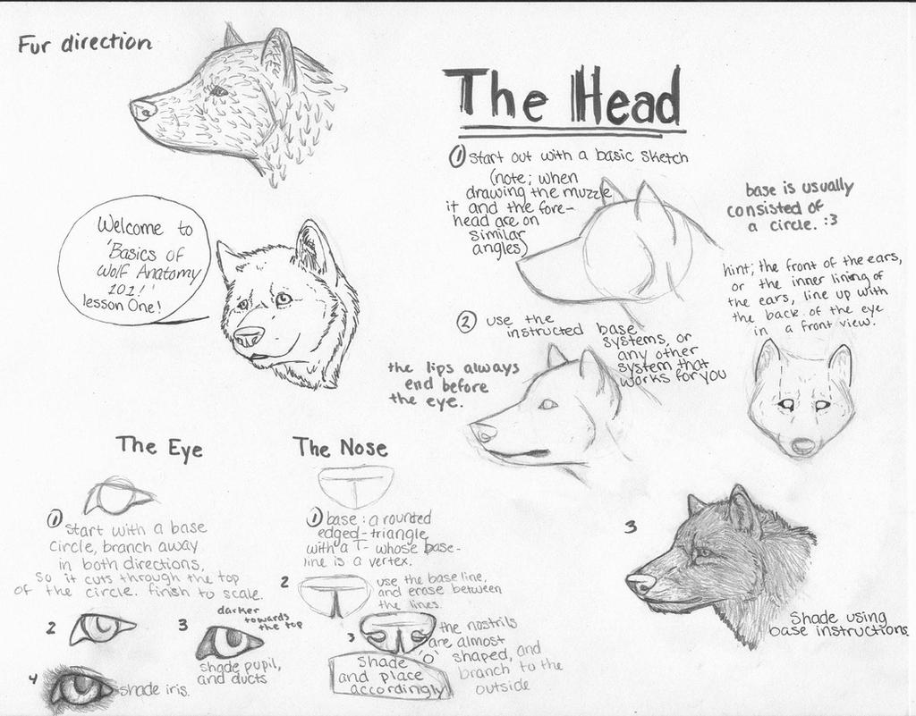 How To Draw A Wolf Head Side View  Photo#20