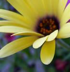 flower in my garden by neaters2000