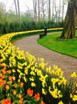 Tulpen Uit Amsterdam by JeanneValjeanne