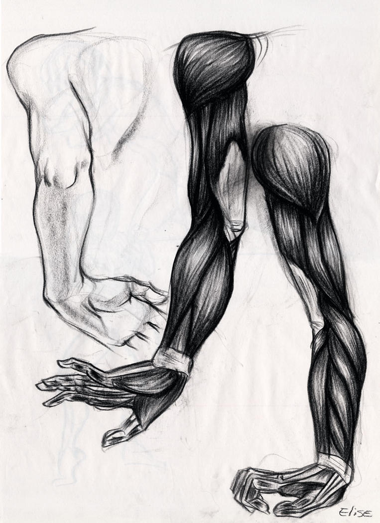 arm studies by MagnaStorm