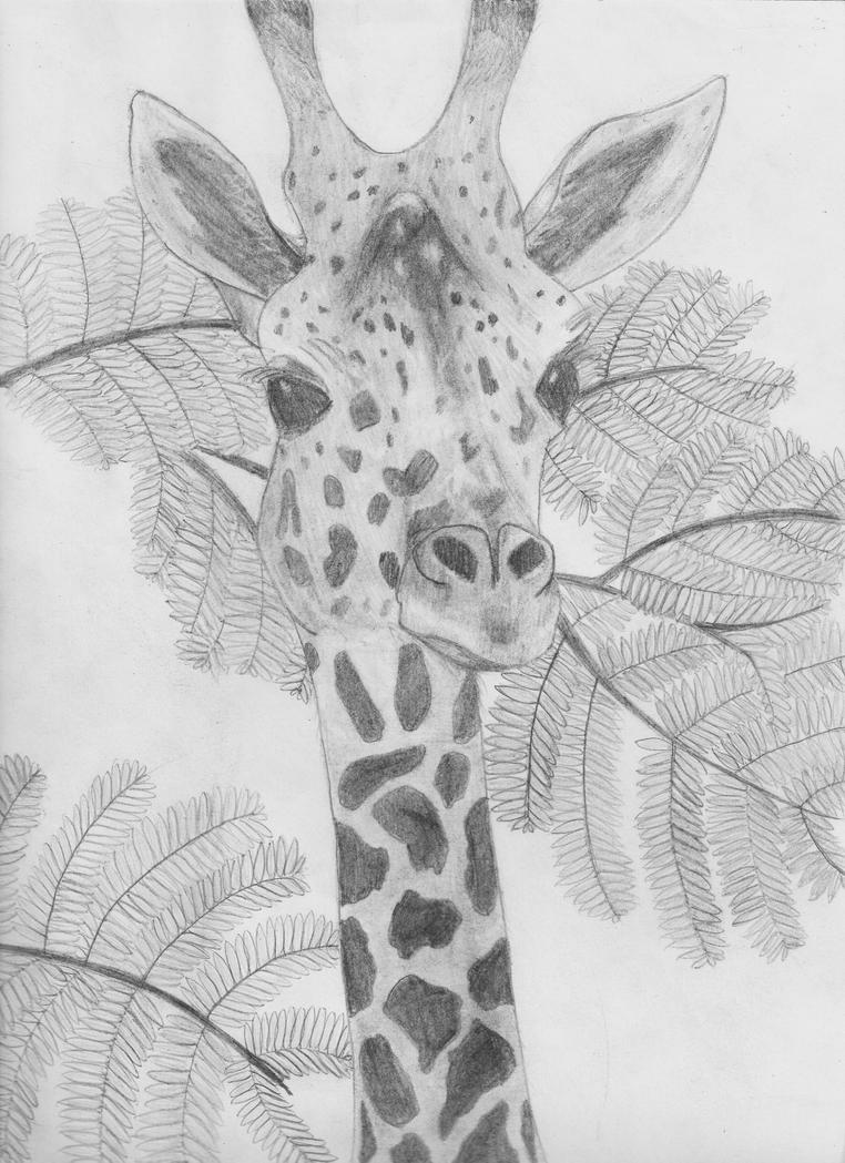 Giraffe Drawing by Peixe96 on DeviantArt Cool Giraffe Drawing