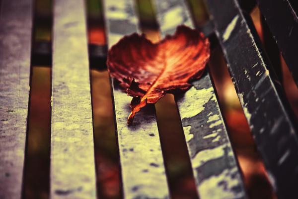 December Red... by xDeepLovex