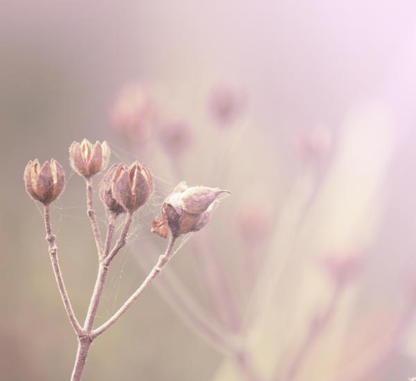 Spring L o v e by xDeepLovex