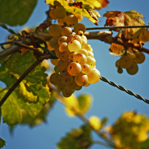 Per il vino by xDeepLovex