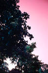 Pink Sky and Blue Trees by Reskiy