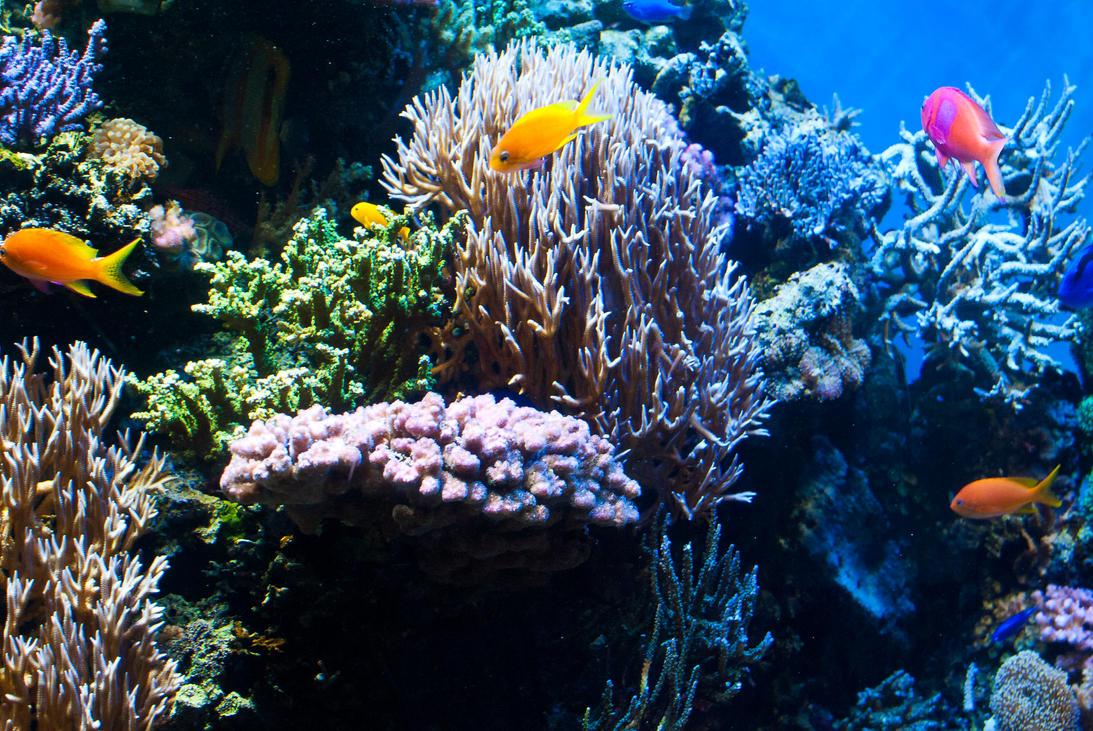 Monterey Aquarium Reef By Brandonlee88 On Deviantart