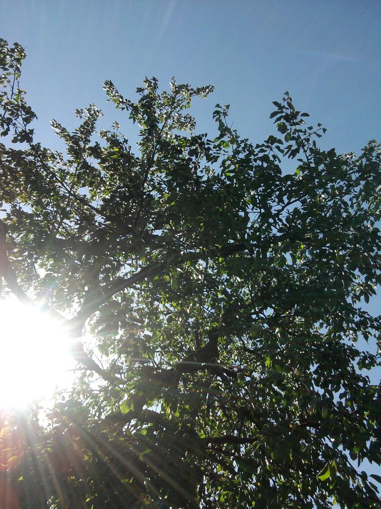 Sonnenschein by SwingLifeAway20412