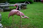 Flamingo Yard Stock 002