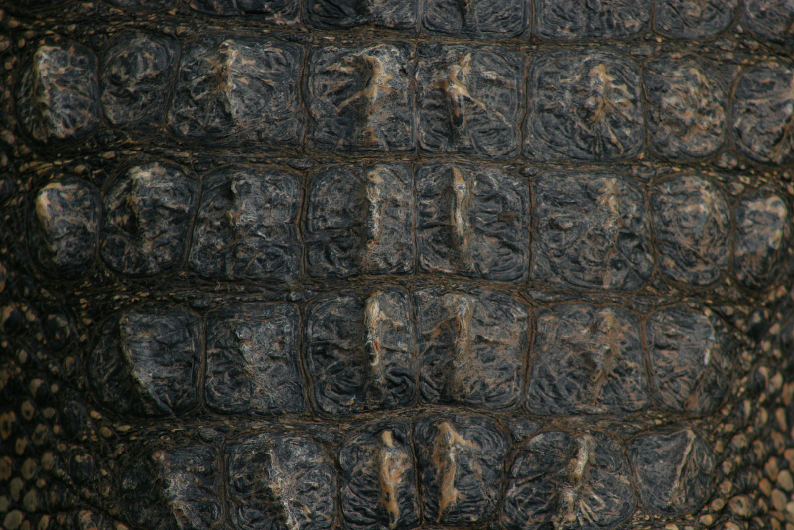Alligator Neck Texture