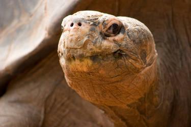 Happy Tortoise by crumpstock
