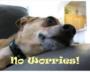 No Worries - Mellow Yellow