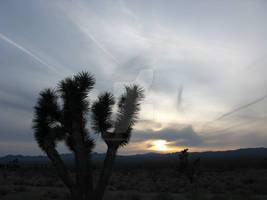 Searchlight Sunset