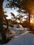 Woods - Snowy - Sunny 4 by hrimthurs-stock