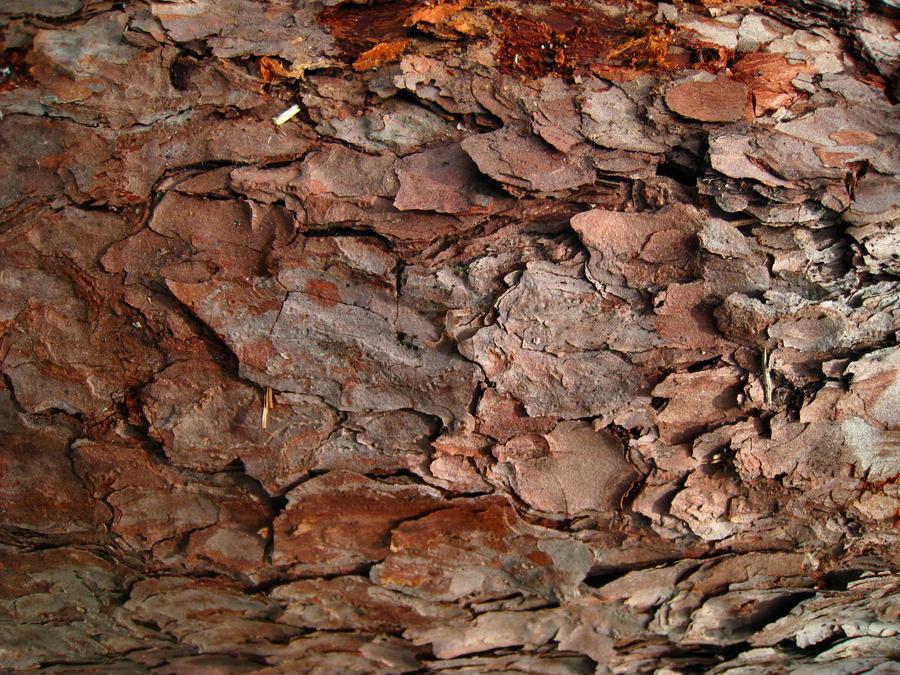 Bark 1 by hrimthurs-stock