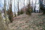 Wooded area 1
