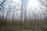 Wooded Area 3