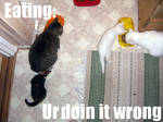 lol cat thing
