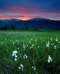 Norwegian Wilderness Reworked