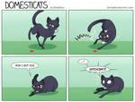 DomestiCats - The Red Dot