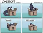 DomestiCats - Invisible