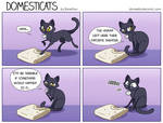 DomestiCats - Surprise