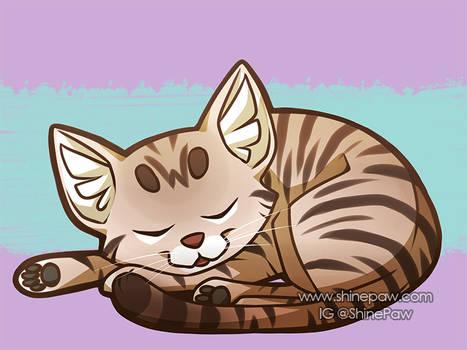 Sleeping Cat - Patreon request