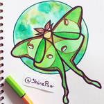 Luna moth - angular watercolor painting