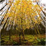 Autumnal distortion