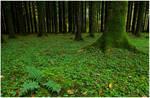 fern green by sassaputzin