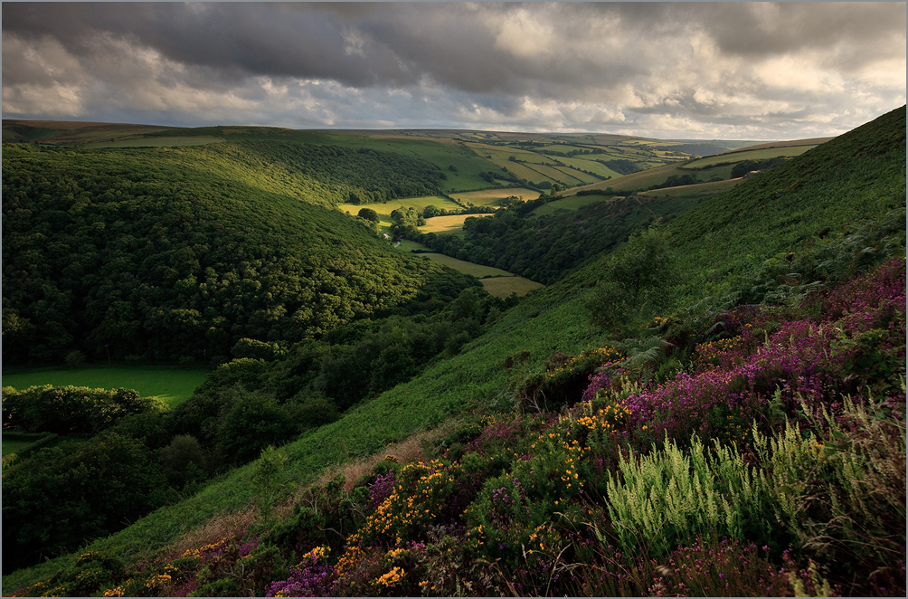 exmoor impression by sassaputzin