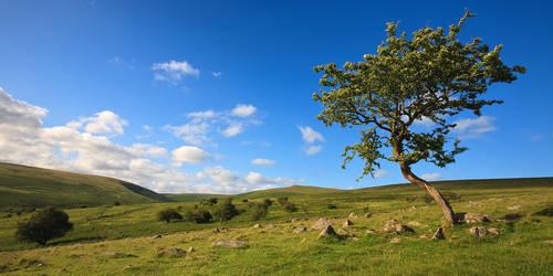 south dartmoor plains by sassaputzin