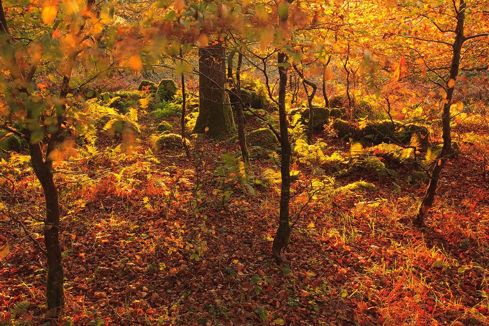 Autumnal nuetron by sassaputzin