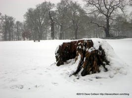 Snowy stump by TheBigDaveC