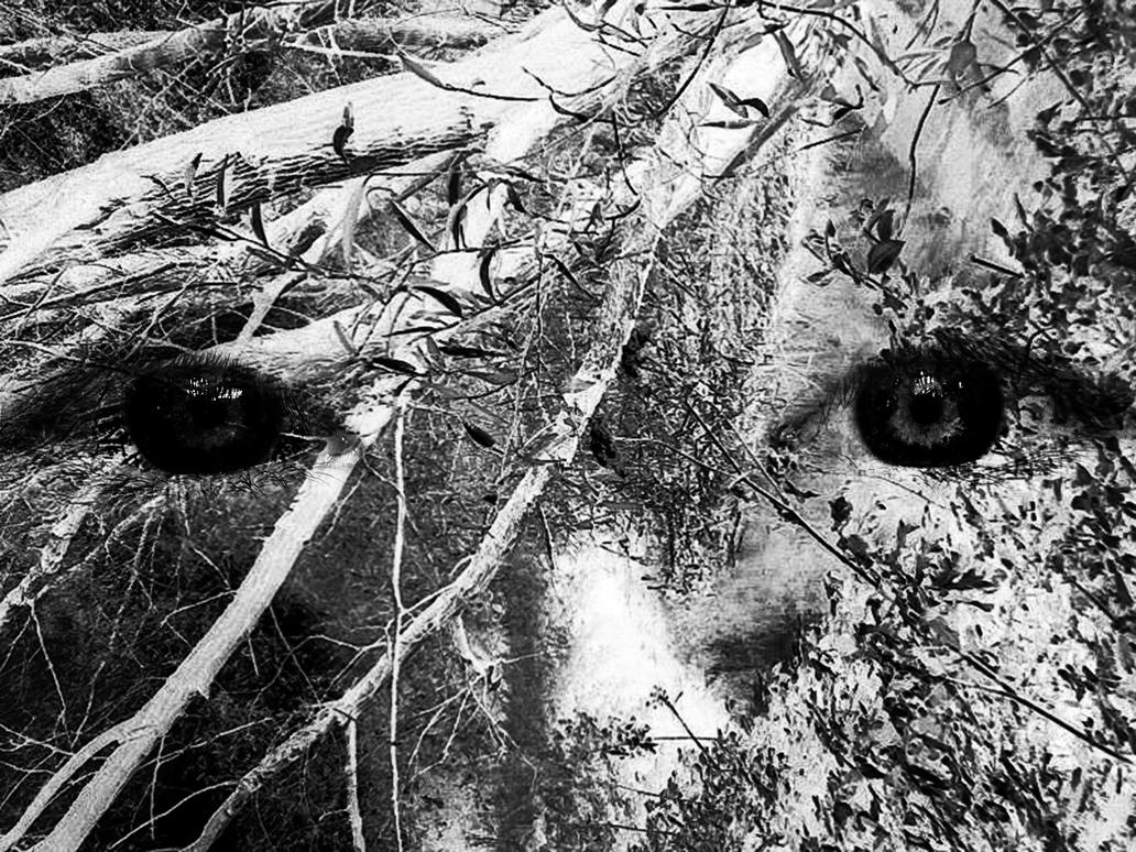 Trees is Watching You by TheBigDaveC