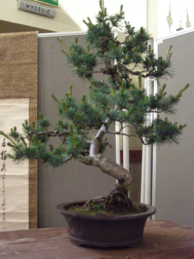 Bonsai 2 By Yeah Thats Me On Deviantart