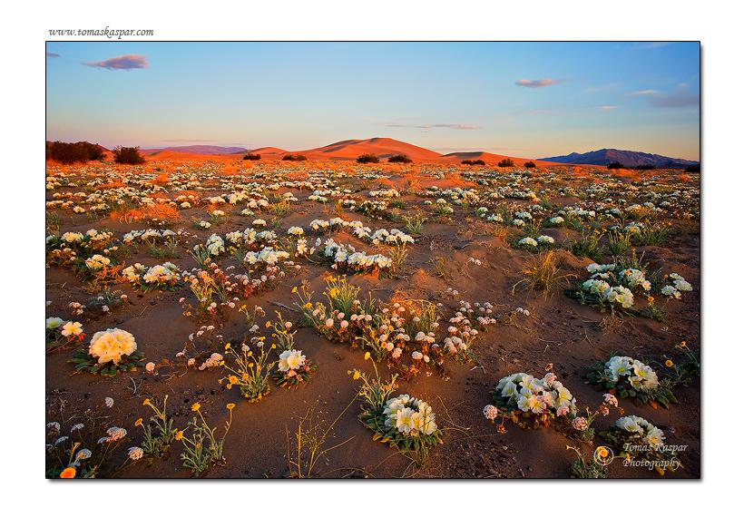 Desert miracle by tomaskaspar