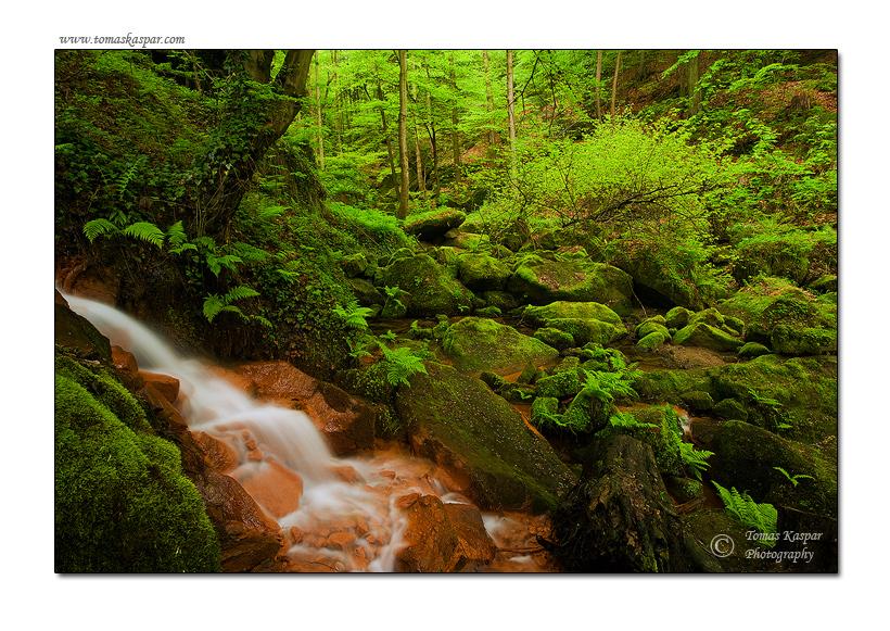 Fairy forest by tomaskaspar
