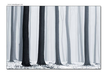 New Years winter forest by tomaskaspar