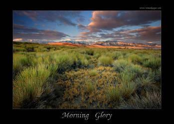 Morning Glory II by tomaskaspar