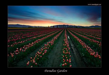Paradise Garden by tomaskaspar
