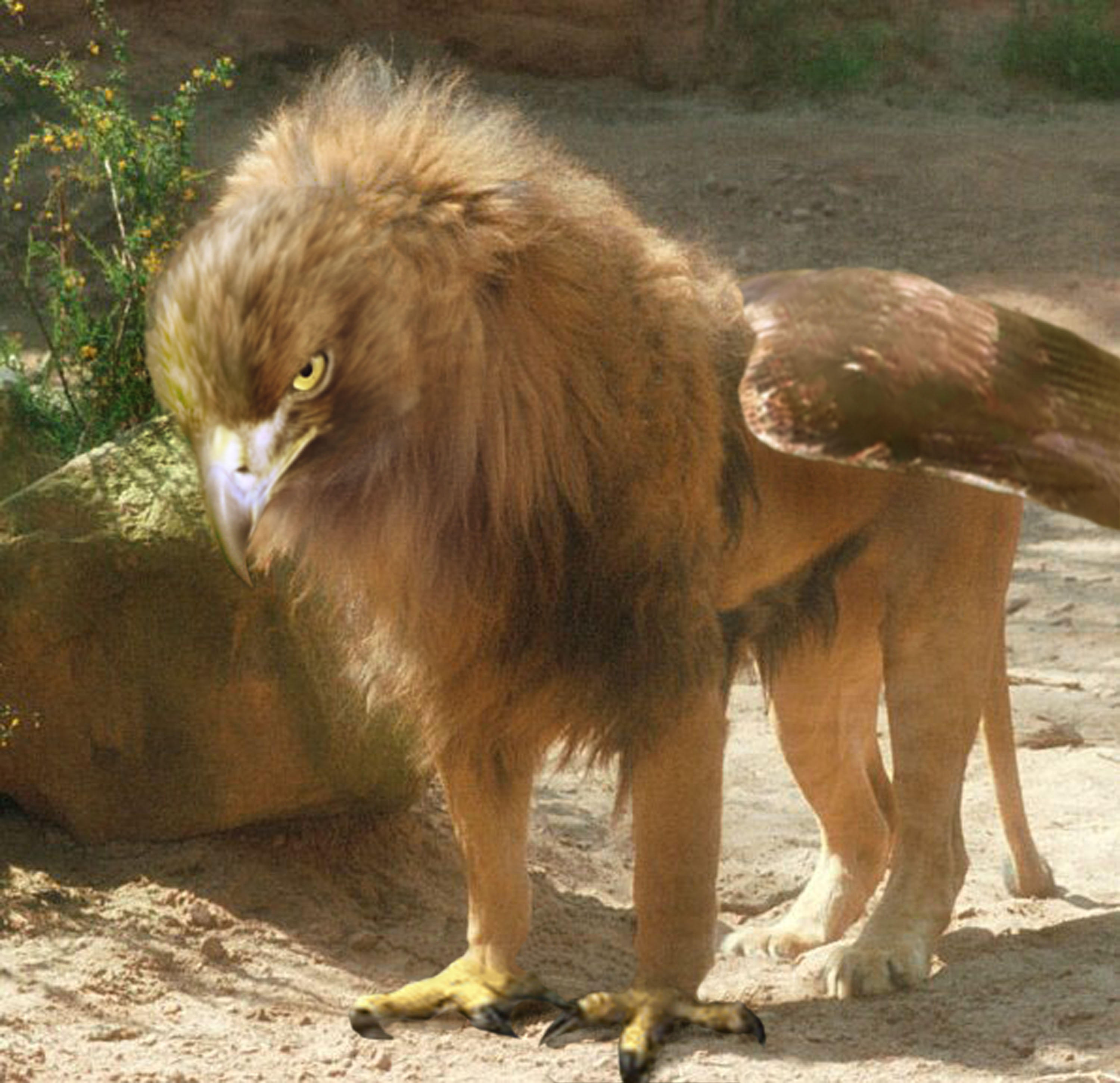 When feeding their nestlings gryphon parents seek large prey like horses and oxen awwducational - A picture of a griffin the creature ...