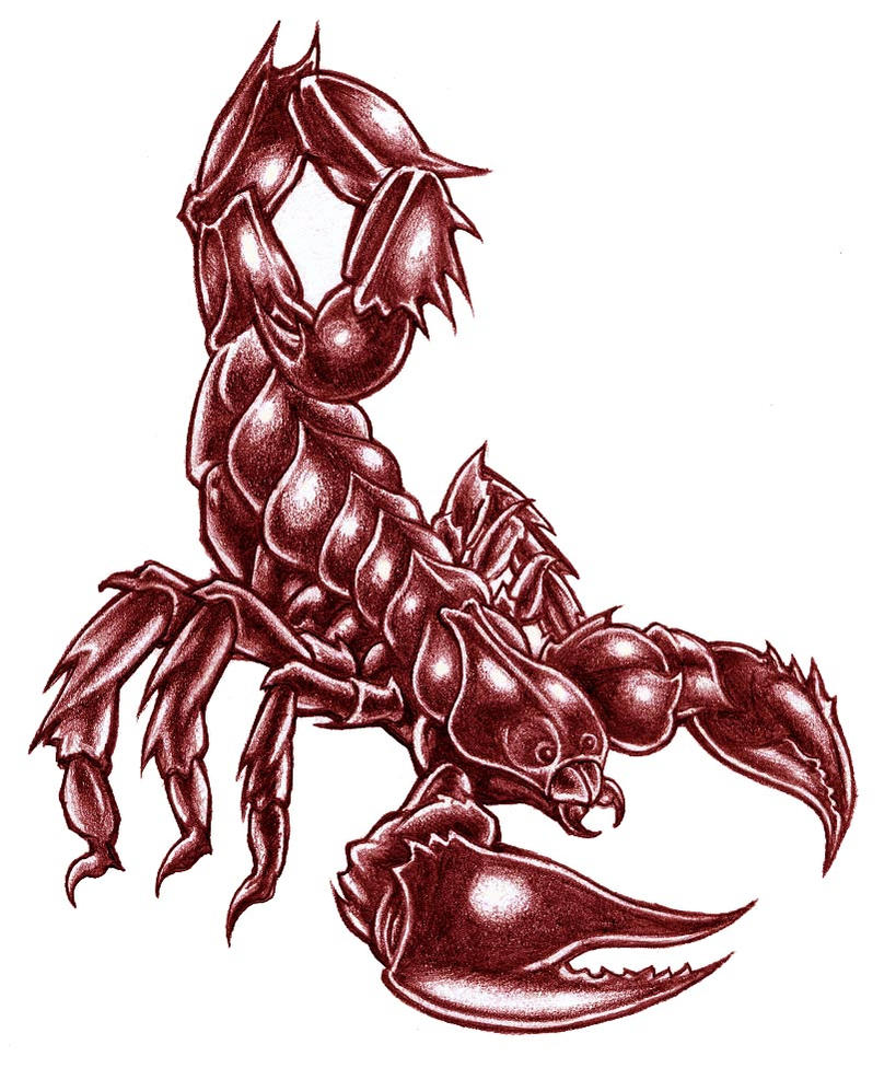 Scorpion by JJRParker
