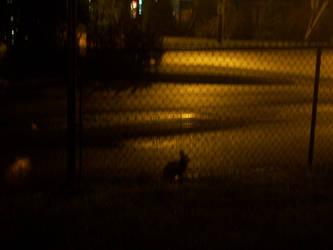 Late Night Bunny by MuertoMushroom