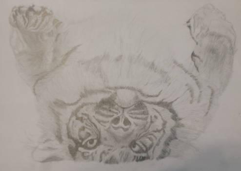 Playful Tiger Sketch