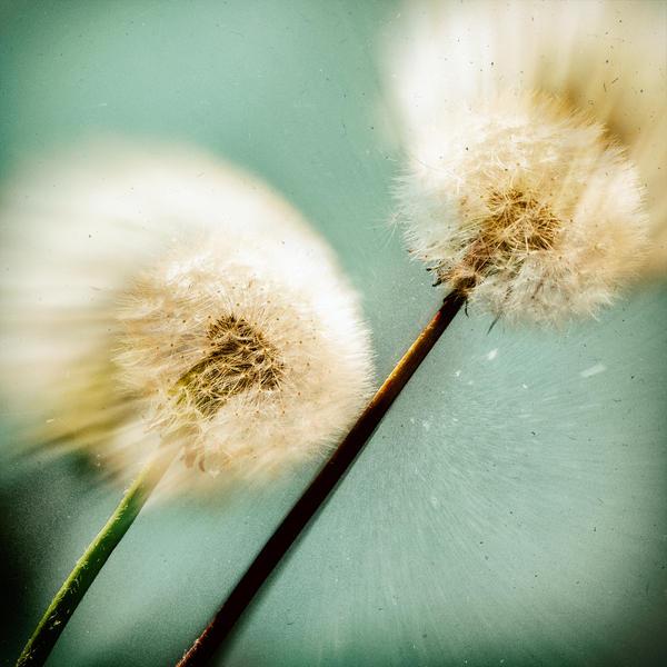 Je m'en remets au vent by Sei-Zako