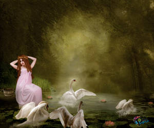 Cisnes by NUBES112