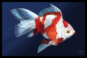 Goldfish - Speedpaint by Majoh