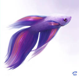 Magic Betta by Majoh