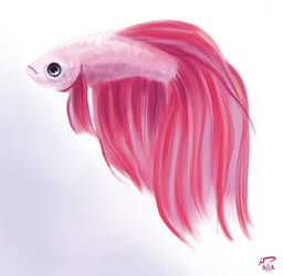 Bummed Betta by Majoh