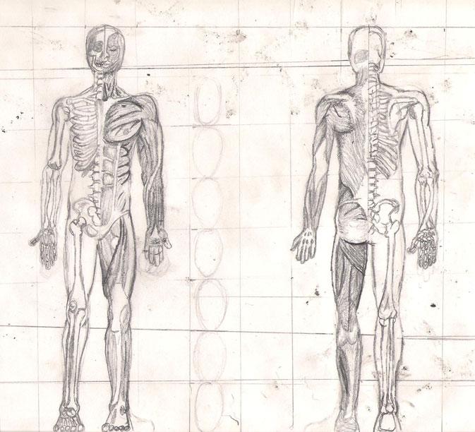 Human Anatomy Drawing Book Pdf Free Download